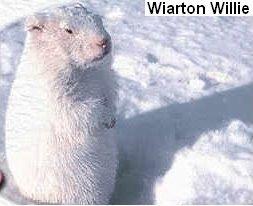 Wiarton_Willie